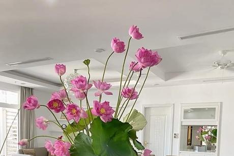 Cách cắm hoa SEN nở căng, bền cánh?