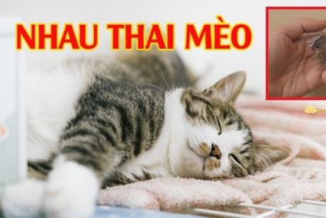 Nhau thai mèo có giúp gia chủ may mắn, phát tài?