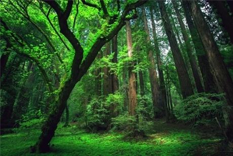 Tại sao sau khi đi rừng, đi suối về bị lơ ngơ?